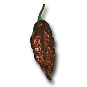 Bhut Jolokia Chocolate chili paprika vetőmag