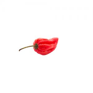 Habanero Red Chili paprika vetőmag /15 szem