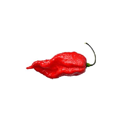 Bhut Jolokia chili mag /10 szem