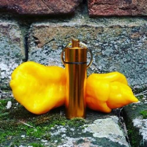 Trinidad Scorpion Yellow chili por kulcstartóban